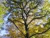 Ранна есен